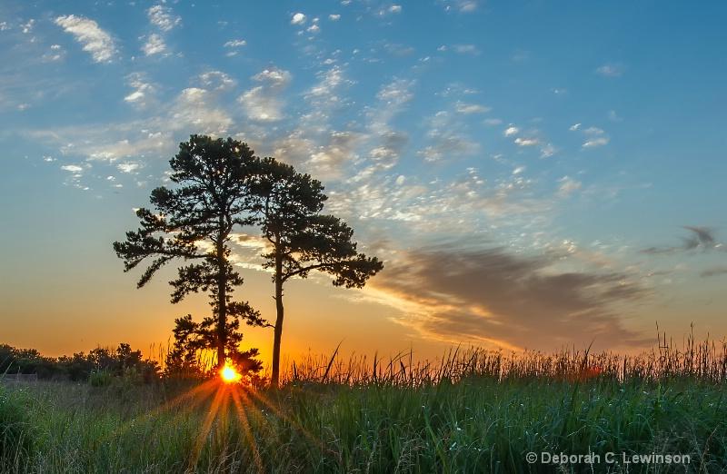 Rising Sun - ID: 13104343 © Deborah C. Lewinson
