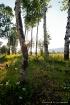 Aspen View