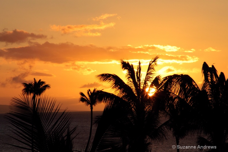 Maui Evening - ID: 13151633 © Suzanne Andrews