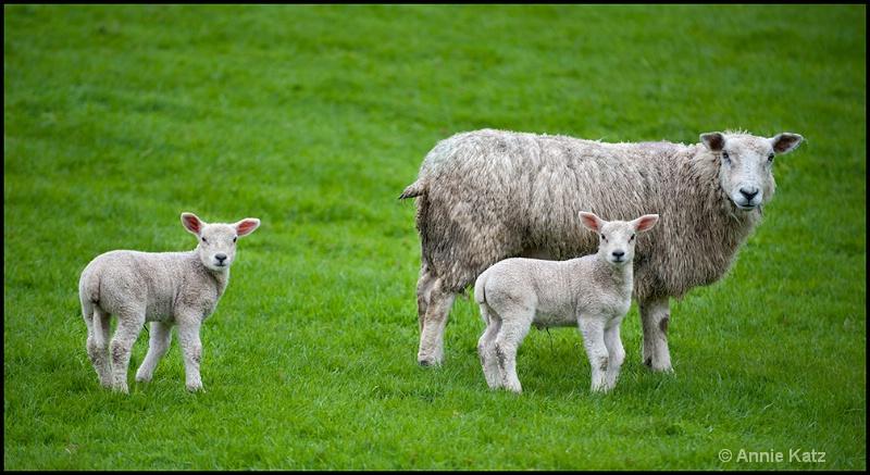 mother   2 kids - ID: 13175702 © Annie Katz