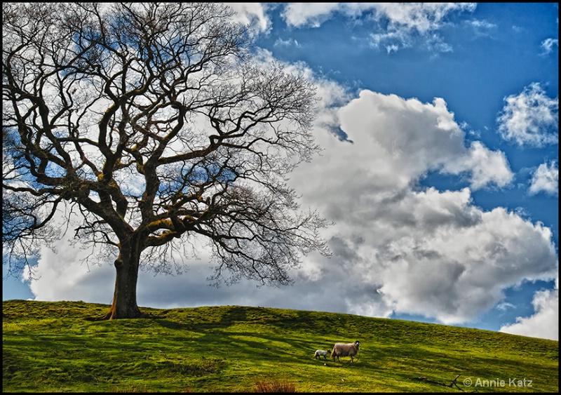 sheep in the lake district - ID: 13175725 © Annie Katz