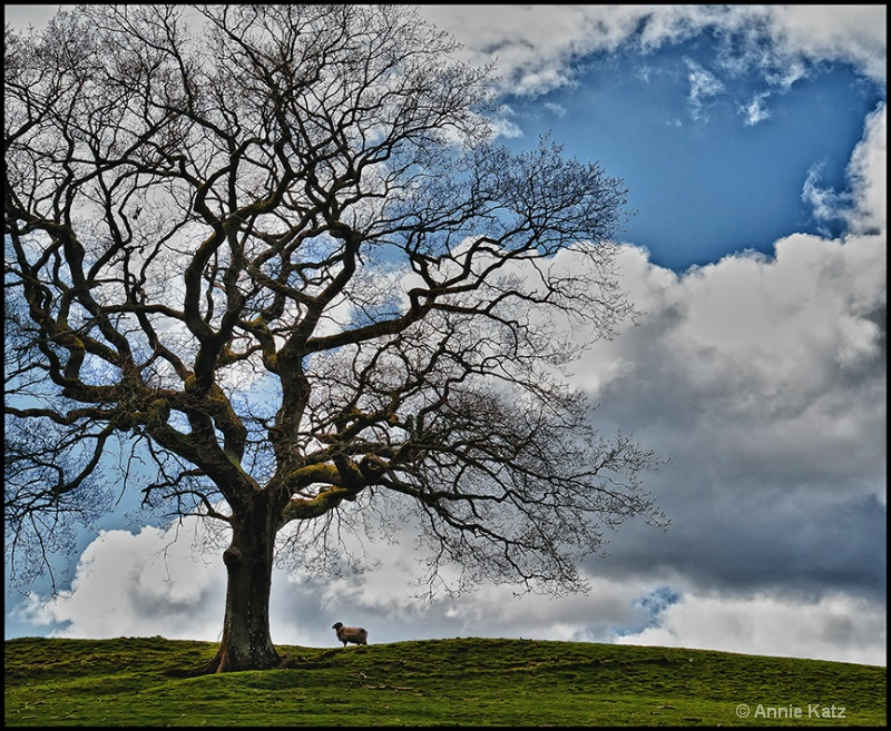 sheep on the hill - ID: 13175730 © Annie Katz