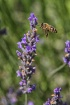 Bee gentle