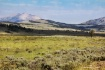 Yellowstone Meado...
