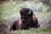 Yellowstone - Bis...