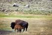 Yellowstone - Fee...