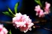 <b>+ New Blossom ...