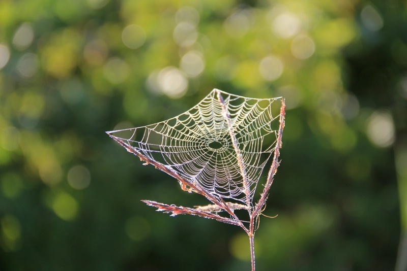 Oh, what webs we weave …