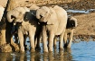 Elephants drinkin...