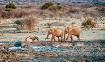 Elephants taking ...