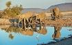 Elephants reflect...