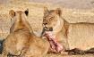Lions finishing d...