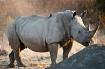 Rhinoceros power