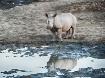 Lonely Rhinoceros...