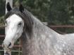 Grey & White Beau...