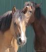 The Horse Whisper...