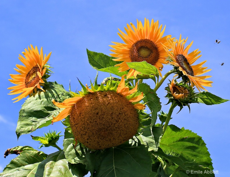 Hello Sunshine - ID: 13244729 © Emile Abbott