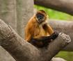 Omaha Zoo Monkey