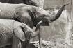 Elephant Grin