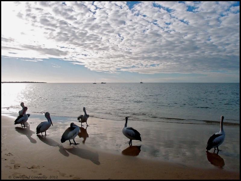 * A Pelican Brief *<p>