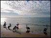 * A Pelican Brief...