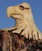 Hand-Carved Eagle