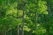 Michigan Forest B...