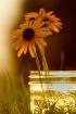 Jar of Sunshine