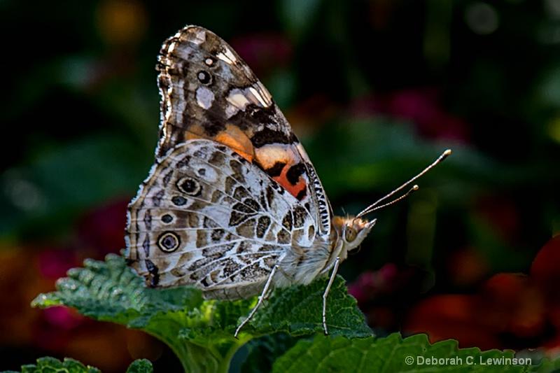 September Butterfly - ID: 13290119 © Deborah C. Lewinson
