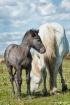 Mare & Foal 1201