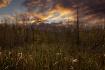Swampland Sunset