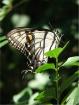Beautiful Butterf...
