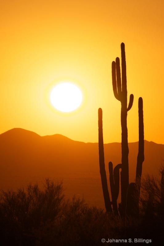 Arizona Sunset - ID: 13340272 © Johanna S. Billings
