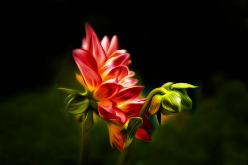 Midnight Garden - ID: 13383481 © Karen Celella