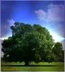 The Tree ~