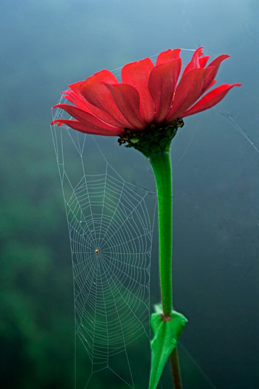 Net and flower