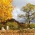 © Carol Flisak PhotoID # 13407725: Rest in Peace ~ Gorham, NH