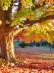 Autumn's Hush