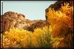Fall in Canyon De...