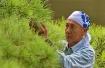 pine tree repair ...