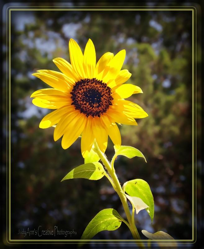 Summer Gold - ID: 13463385 © JudyAnn Rector