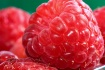 berry details
