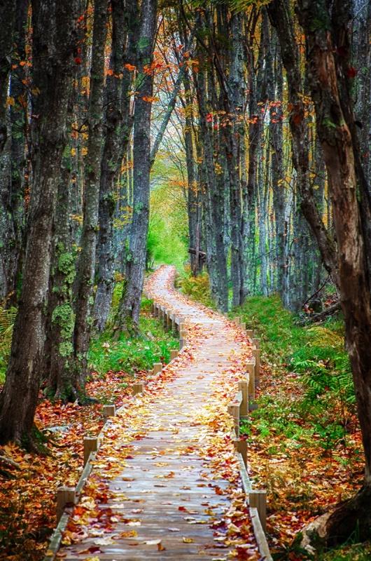 A Walk Through Autumn