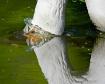 goose looking