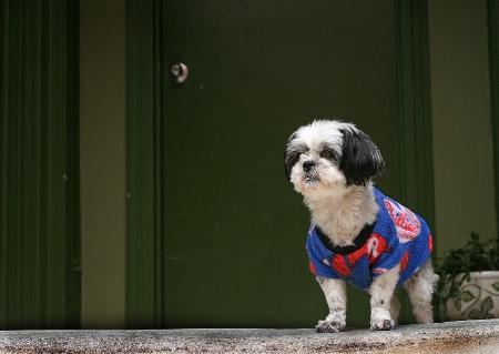 Canine Philly Fan