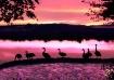 Birds on Sunset L...