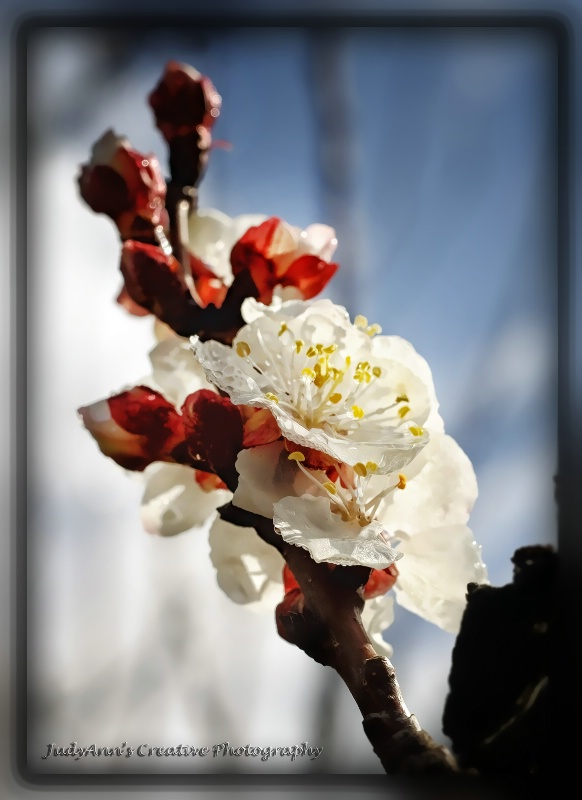 Spring Bloom - ID: 13481985 © JudyAnn Rector
