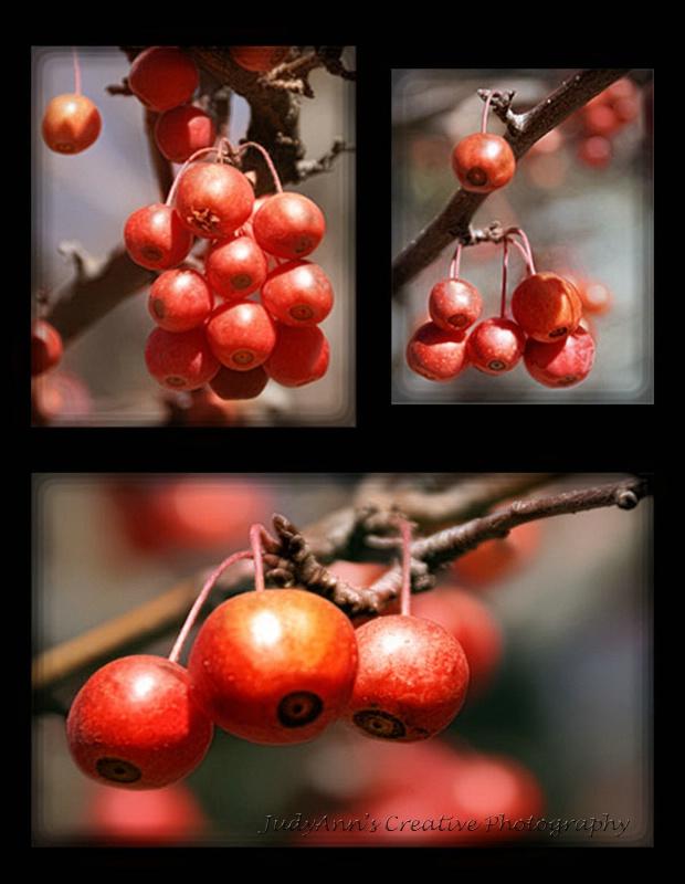 Fall Berries - ID: 13481990 © JudyAnn Rector