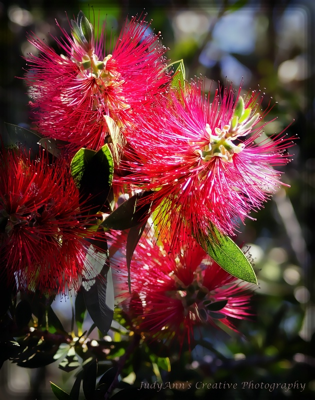Brushes in Bloom - ID: 13482480 © JudyAnn Rector