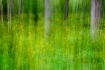 Forest Impression...